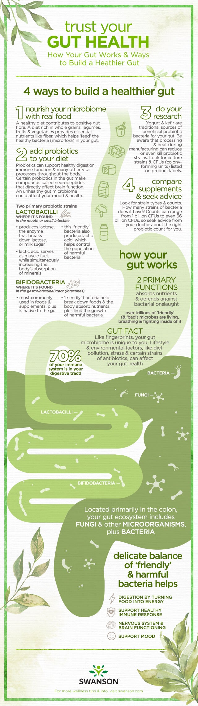 Trust Your Gut Health - how your gut works, plus tips for a healthy gut by Swanson Health