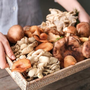 Top 10 Mushrooms for Better Health