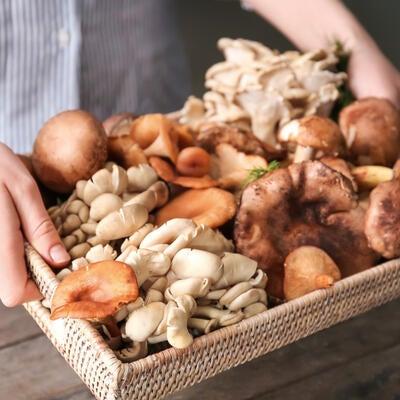 Top 10 Mushrooms for Better Health