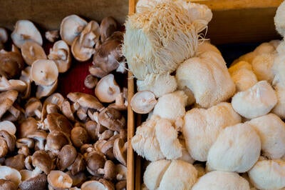 This Mushroom Puts Simba to Shame: Top 4 Benefits of Lion's Mane