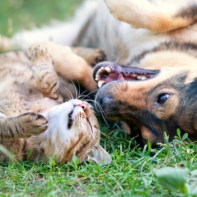 Pet Health Tips: 7 Tips to Help Keep Your Pet Healthy