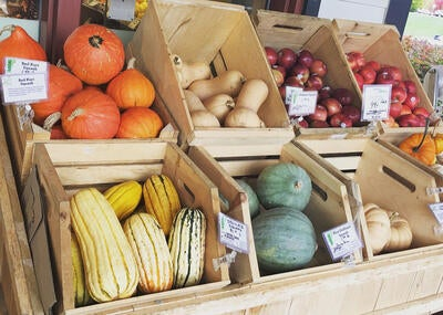 Nutritional Squash and Gourds