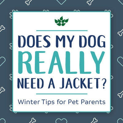 Does My Dog Really Need a Jacket? Winter Tips for Pet Parents