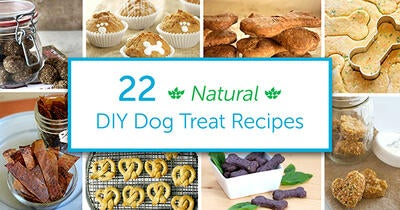 Skip the Toxic Ingredients with These 22 DIY Natural Dog Treats