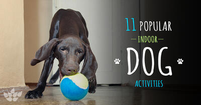 Tired Dog = Happy Dog: 11 Ways to Keep Your Pooch Active Indoors