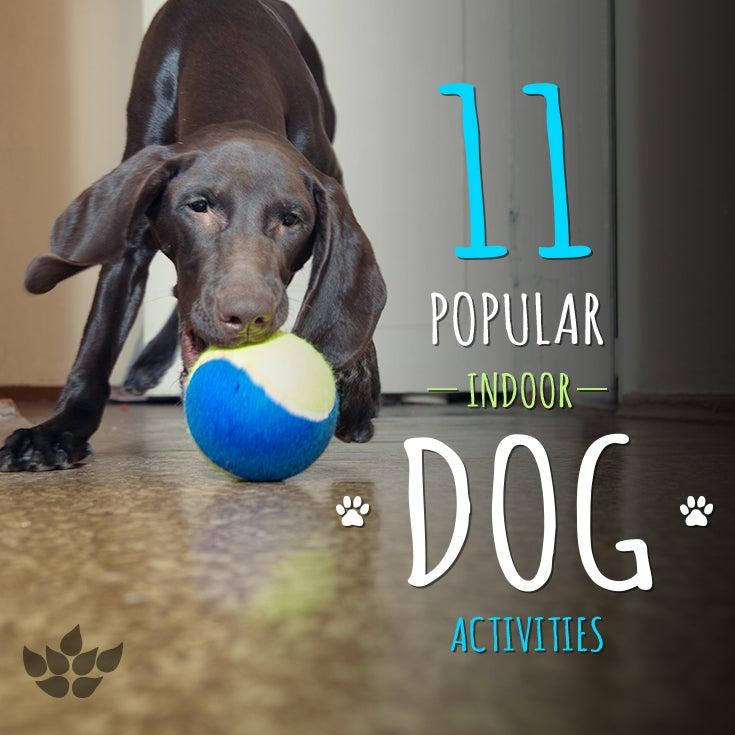 11 indoor dog activities