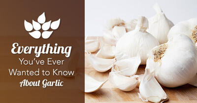 40 Things You Probably Didn't Know About Garlic