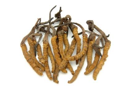 cordyceps mushrooms for health