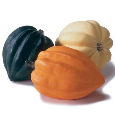 acorn squash pic