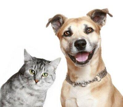 Top 5 Pet Poisons Lurking at Home (National Poison Prevention Week)