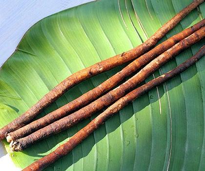 Burdock Root Image